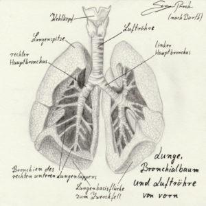 Atmung beim Singen